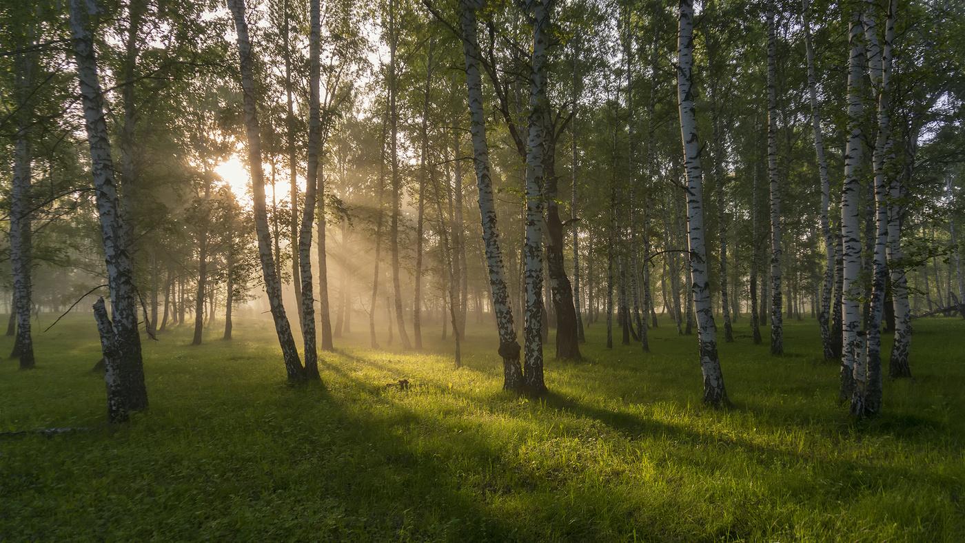 лес летним утром картинки как