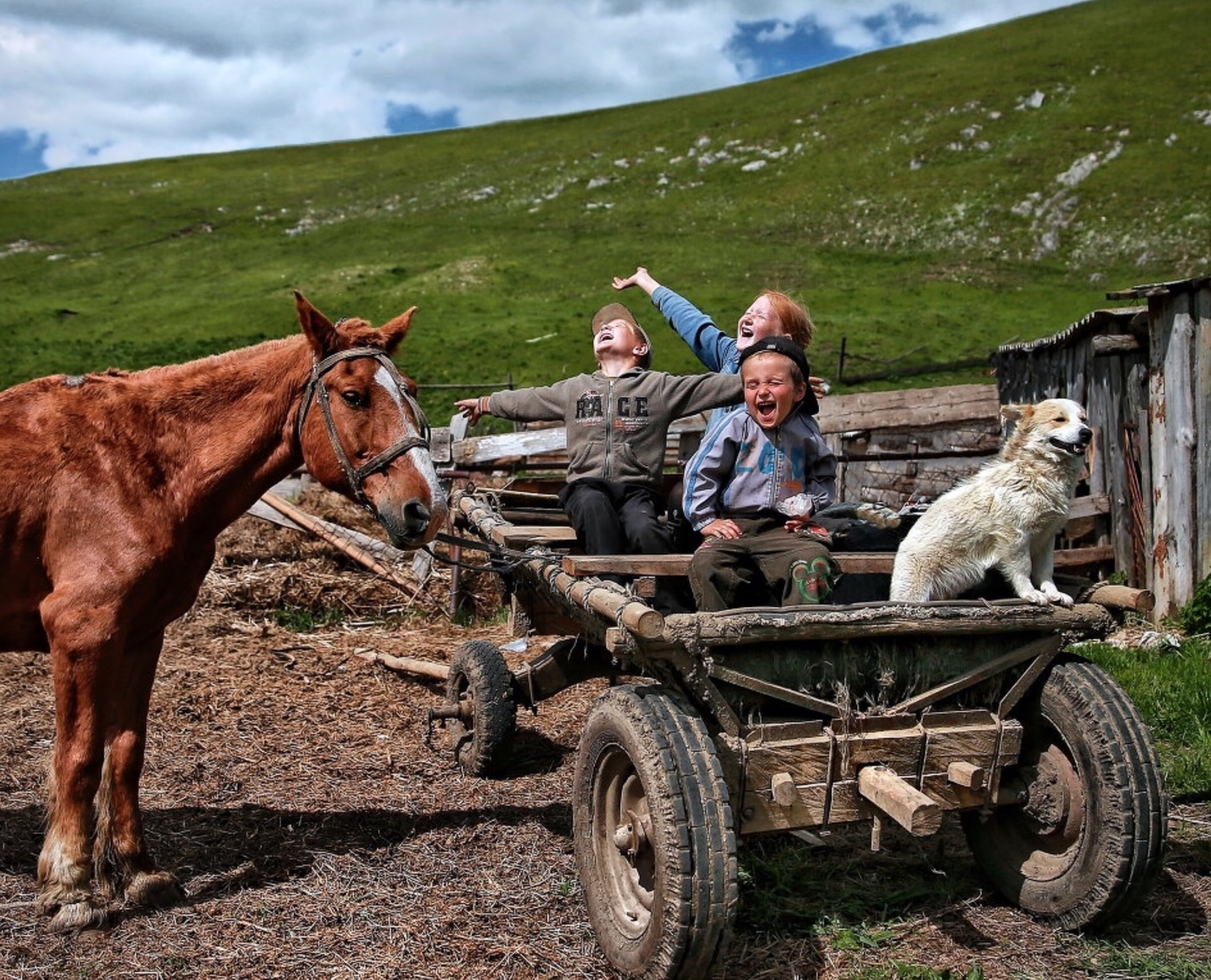 Смешные картинки из сельской жизни