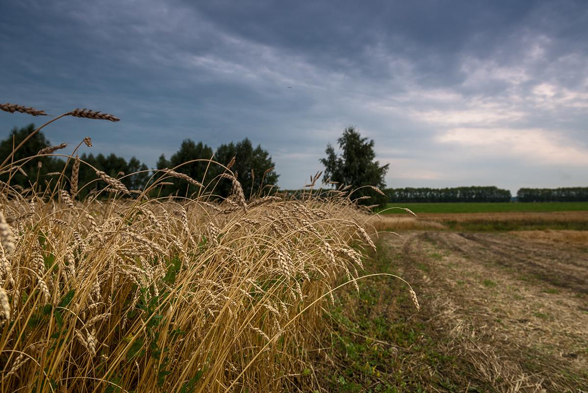 фото полей в сентябре для фотографий хоть знаменитость скрыла