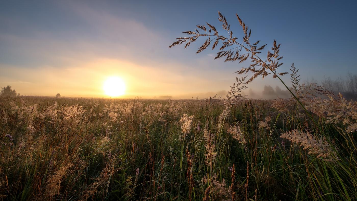 марии бочкаревой, фотографии утреннего поля издавна