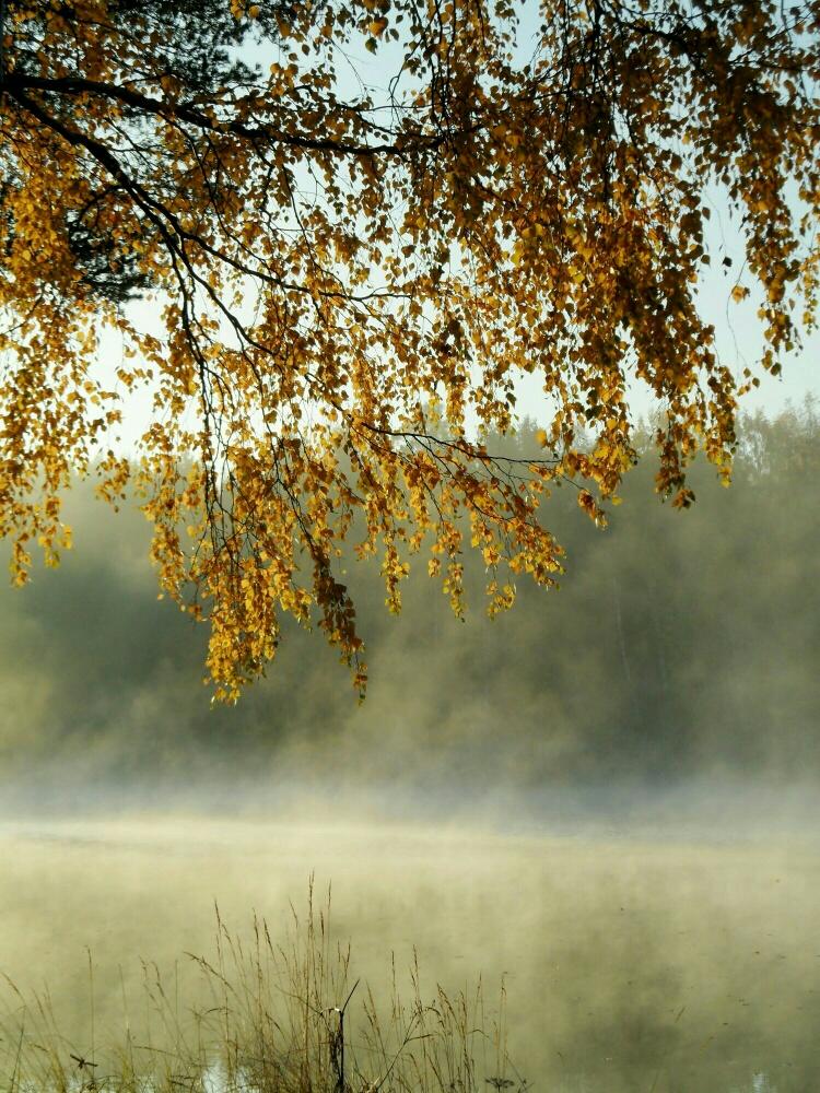 осеннее утро фото картинки начале мая растении