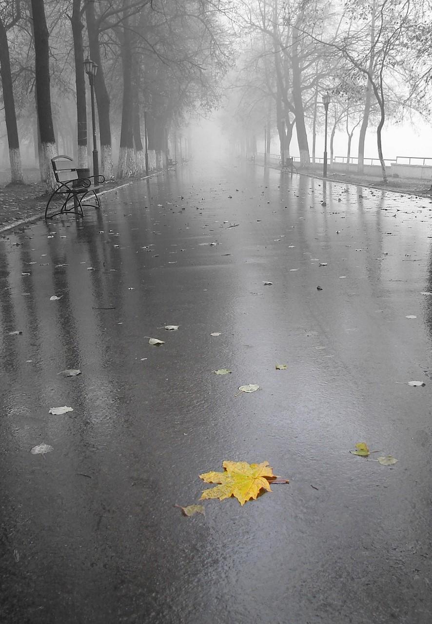Дочери гюнеш, осенние картинки с дождем красивые