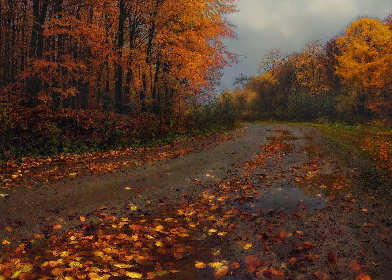Осень дождь фото красивые