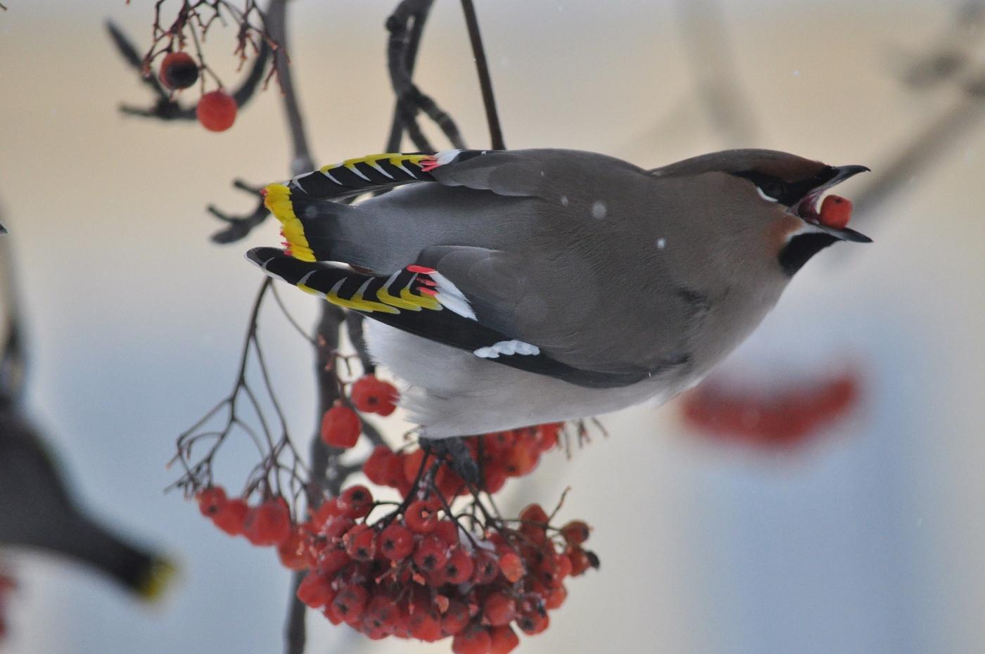 примеру, просторной птицы зимующие в спб фото реставрация завершена