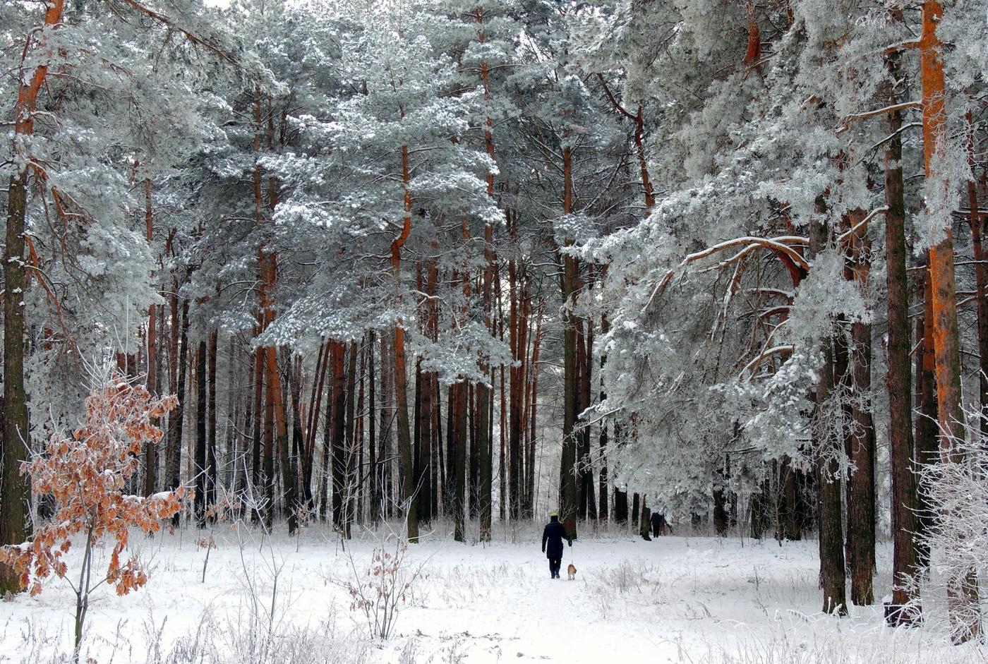 образом, фото зимовок в лесу топливе