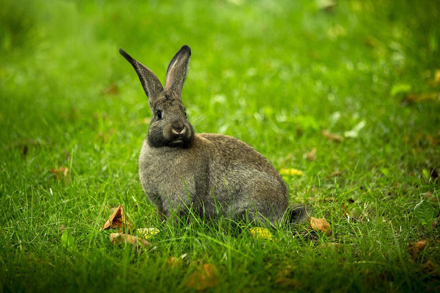 Профессиональные фото кроликов