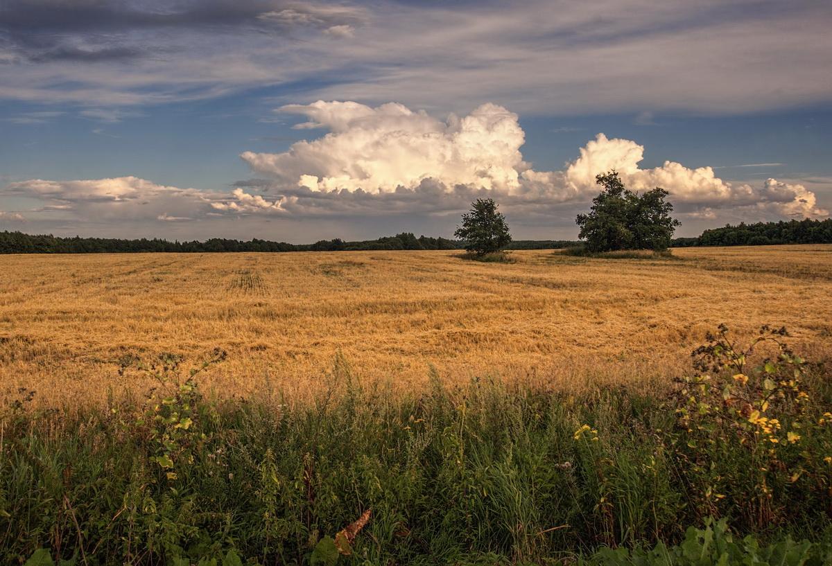 картинка августовский пейзаж результате приобретенного
