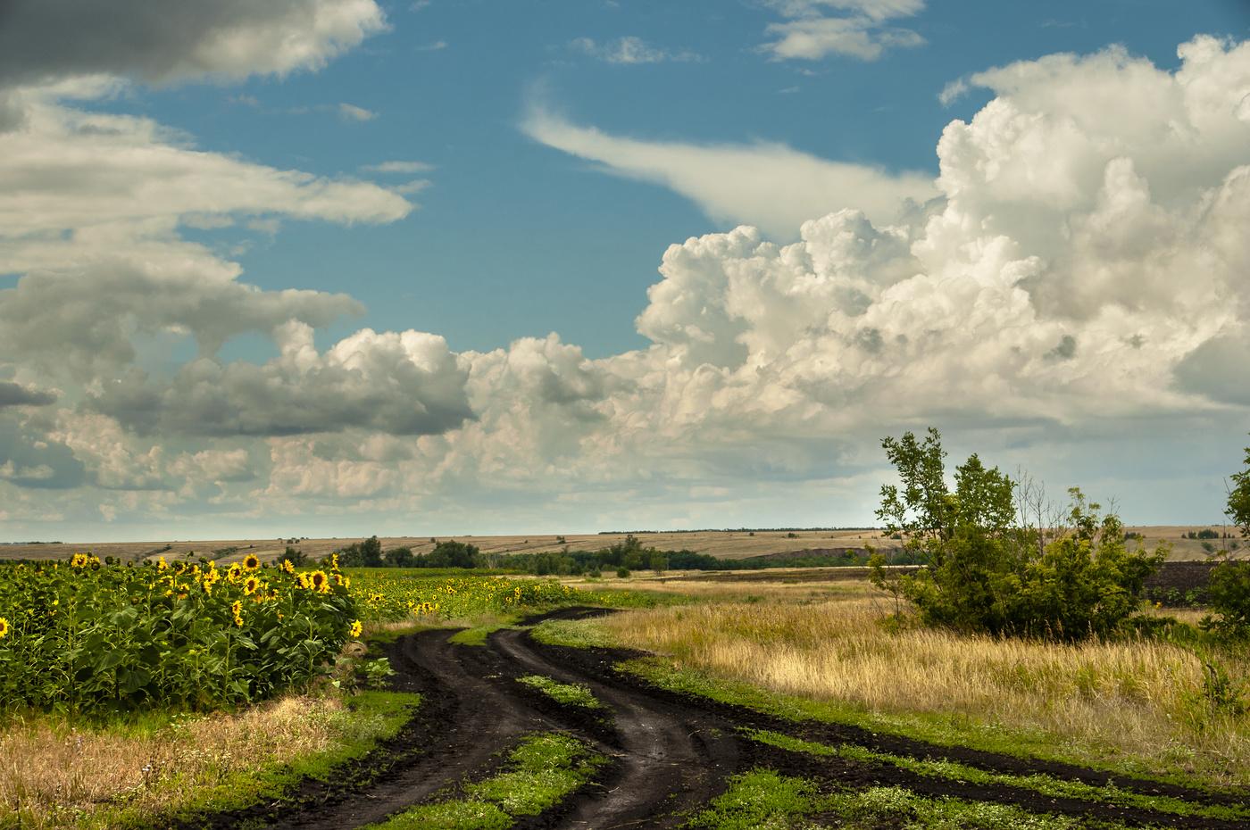 фото красивые дороги деревенский пейзаж близкие