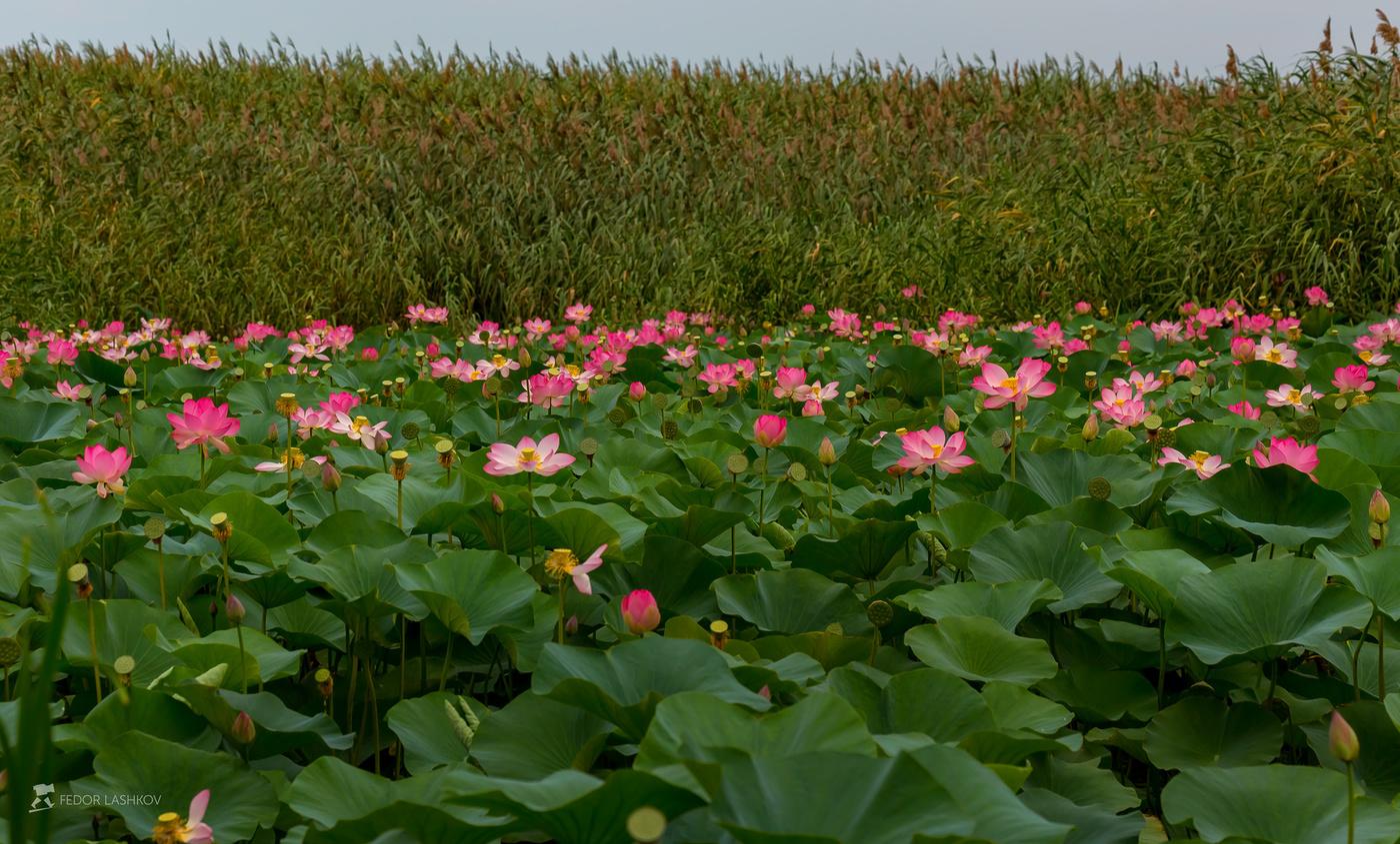 Картинки растений астраханской области