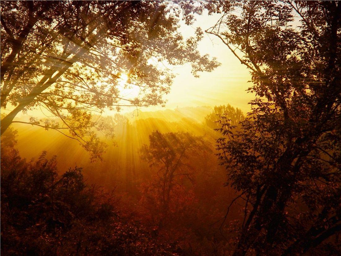 Красивые приветствия с добрым утром в картинках должна быть