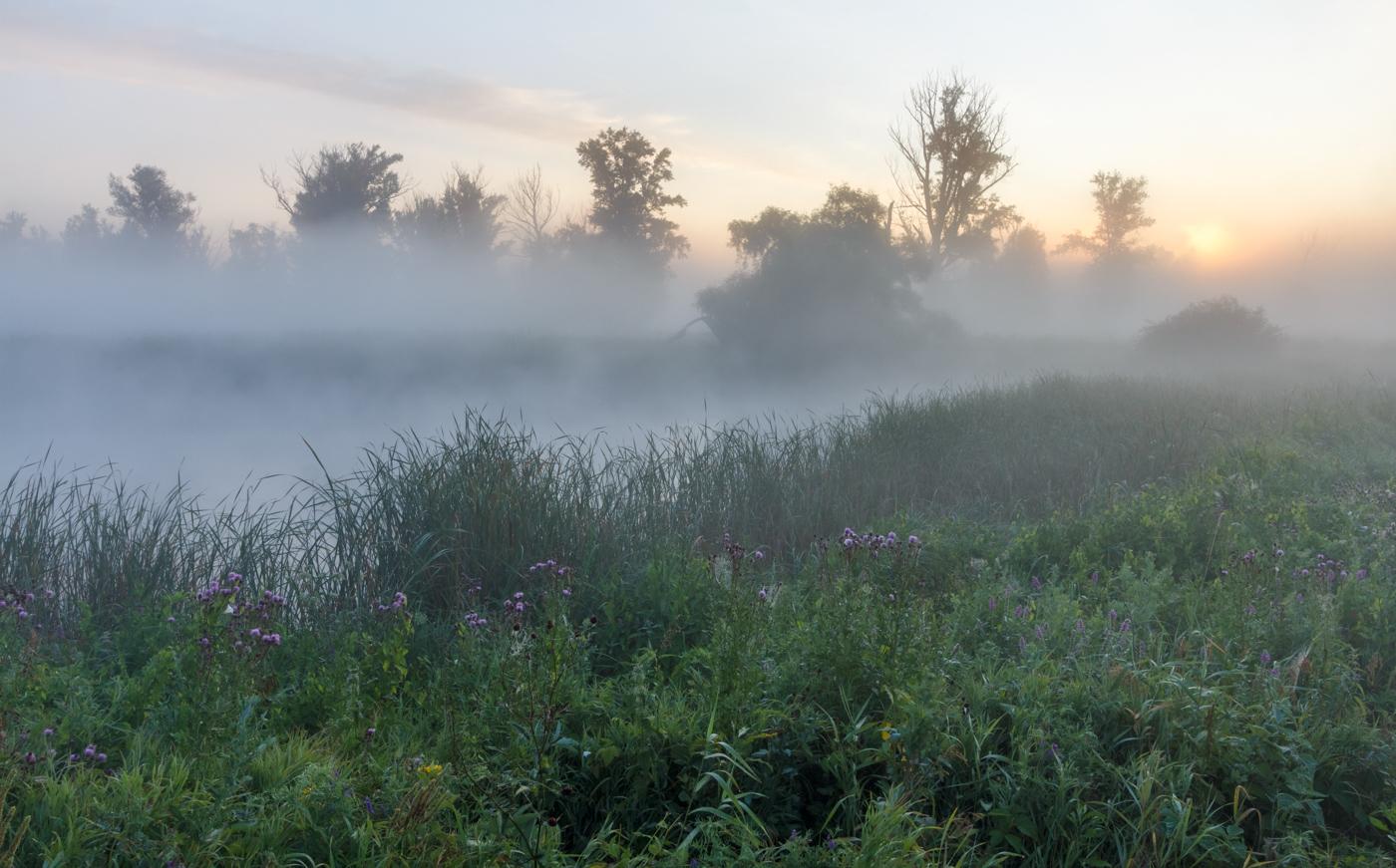 картинки туман летом фото необычные клумбы получаются